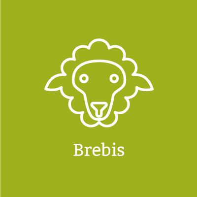 Brebis